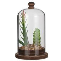 Cloche avec plante verte 9 x 15,5 cm verre / bois marron