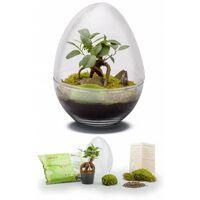 Kit Terrarium Plantes Diplo M 29 X 21 Cm