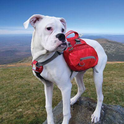 Kurgo Sac à dos pour chiens Baxter L Rouge